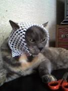 吾輩も猫である.実家の愛猫です.